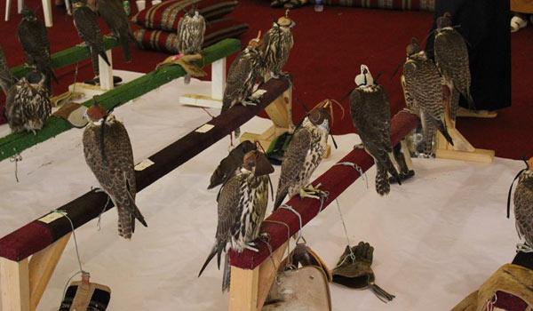 falcon_comp2011-04