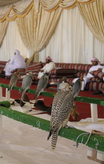 falcon_comp2011-11